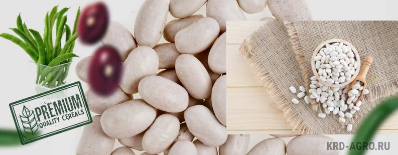 Фасоль Белая «лопатка» оптом